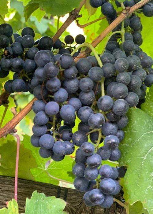 Private Wine Tour Bolgheri